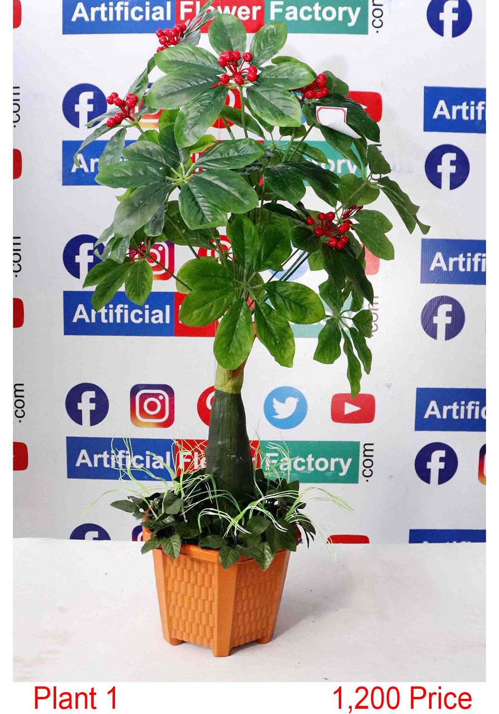 Plant- (1)