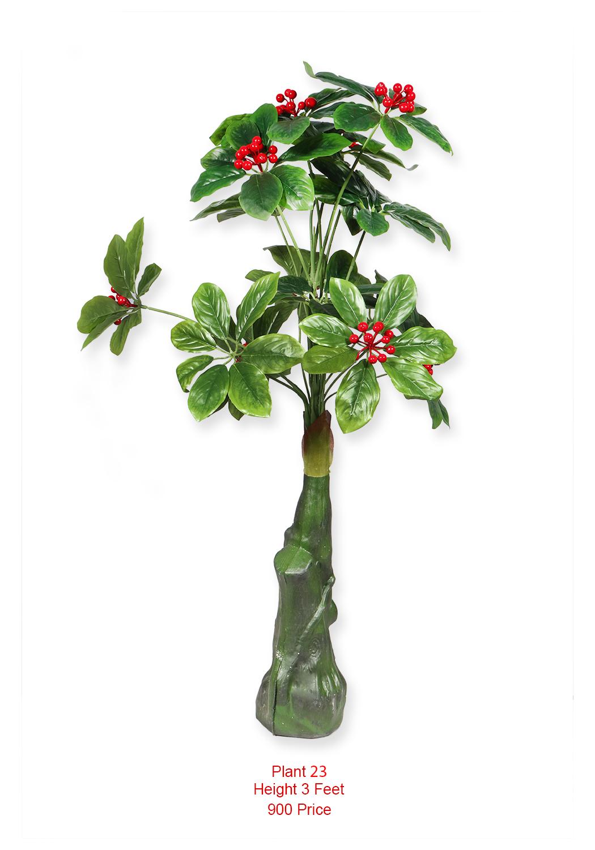 Plant- (23)