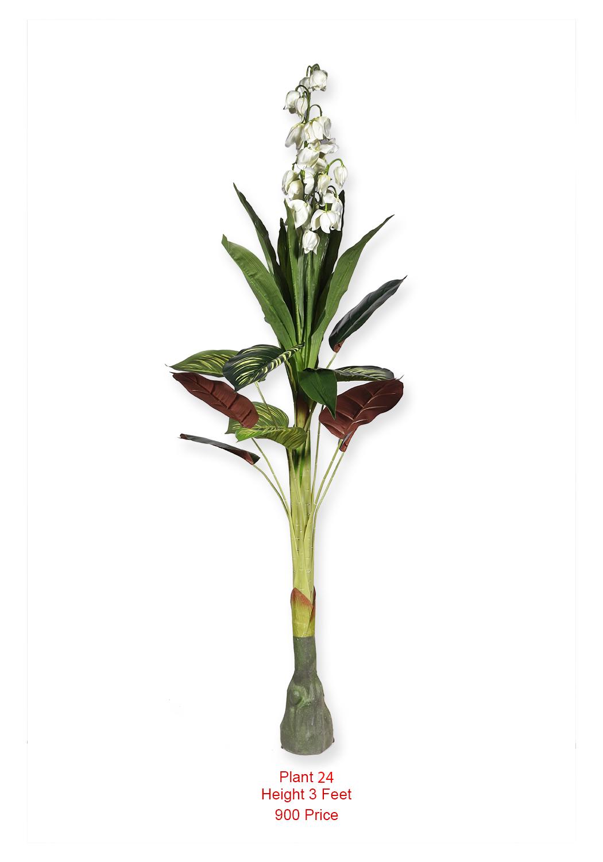 Plant- (24)